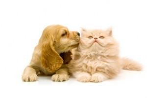 Katteråd ønsket: Tredje øyelokk synes