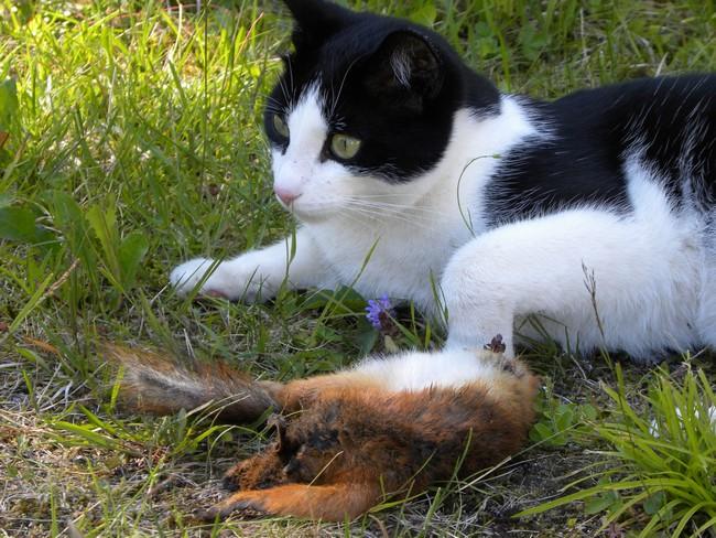 spiser rotter kattemat