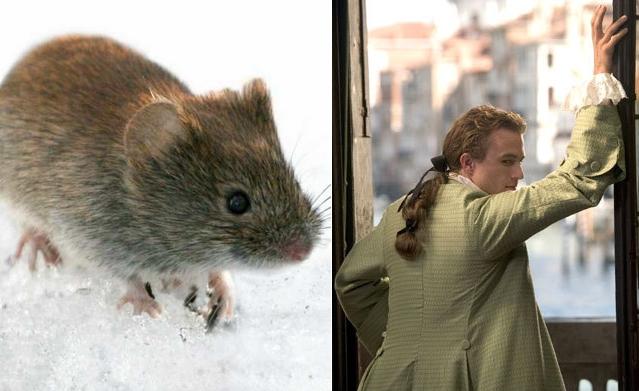 Om mus og menn