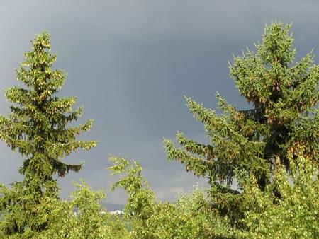 Observert sommervær nær Oslo