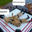 wrestling9
