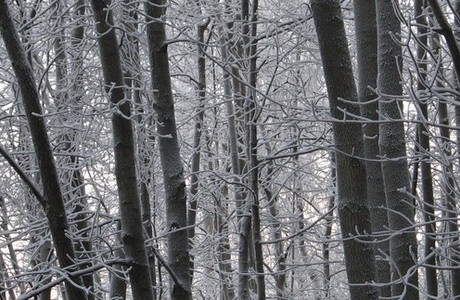 Trees in freezing cold weather