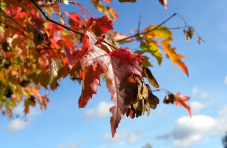 Fall leaves, blue sky