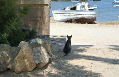 Cat on Isla Tabarca
