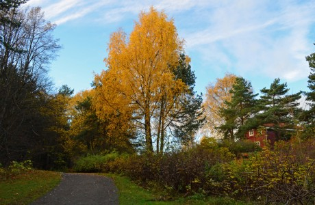 Fall at Kalvøya
