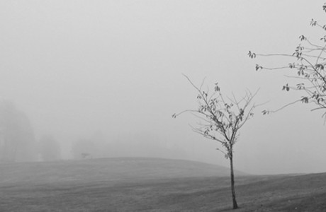 Black and white fog