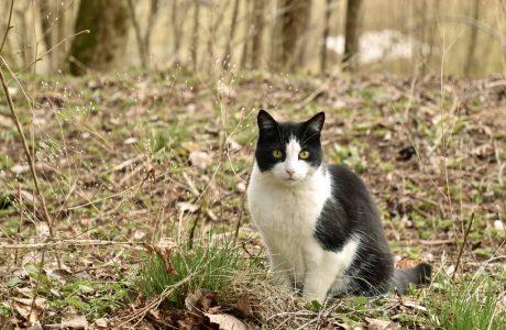 Cat enjoying spring