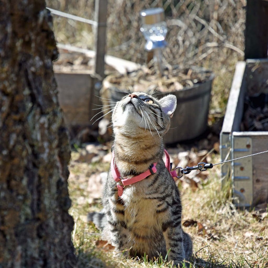 kitten with harness